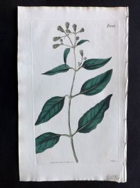 William Curtis 1819 Antique Botanical Print. Climbing Salmea 2062